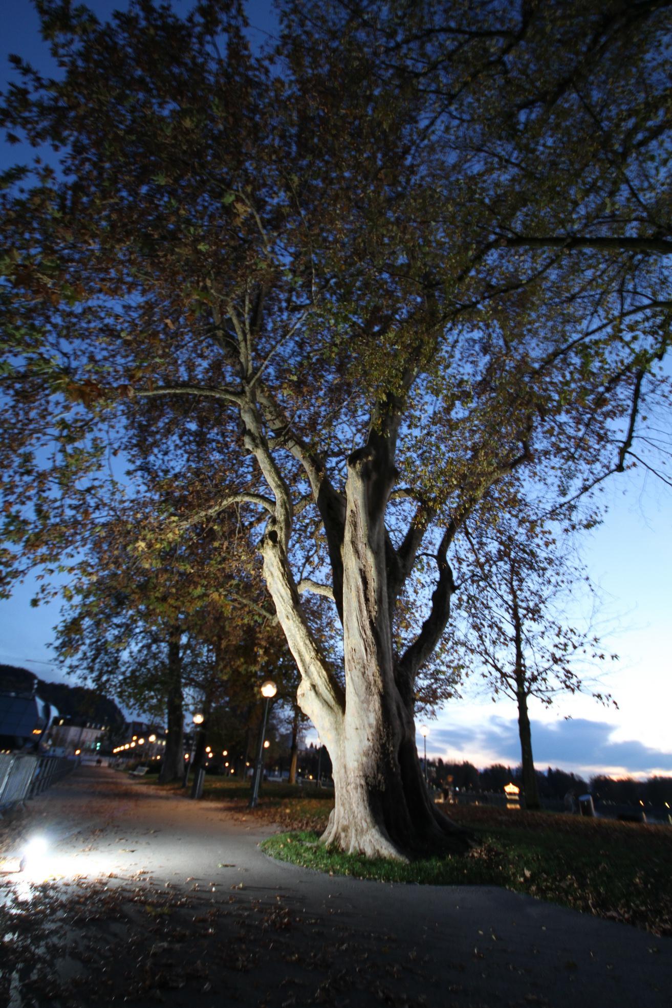 Flashtree-001.jpg